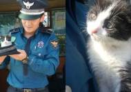 [TEST] '부산 경찰'이 공개한 어미 잃은 아기고양이 '레오'의 근황