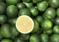 [굿모닝 내셔널]항산화 성분 듬뿍담긴 초록 '풋귤' 을 아시나요