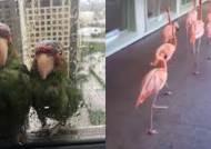 """""""제발 창문 좀…"""" 초강력 허리케인에 새끼 데려와 도움 요청한 앵무새"""