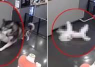 """""""애견 호텔서 우리 개가 무참히 살해당했다"""" 충격 영상"""