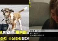 강아지 수십마리를 담뱃불로 지지고 때려죽인 남학생 7명