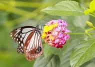 [서소문사진관] 한 겨울에도 이곳은 봄봄봄!!! 가평 이화원 나비생태관