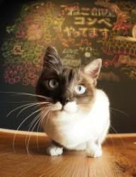[알쓸신세] 일본은 왜 '고양이 천국'이 되었을까
