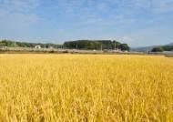 [굿모닝 내셔널] 쌀·도자기·쇼핑…이웃 이천·여주 라이벌전
