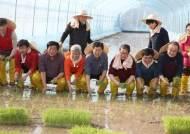 [굿모닝 내셔널] 첫 모내기는 이천, 첫 벼베기는 여주 … 선의의 쌀 라이벌전