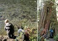 산림기획 - 숲은 생명이다 ② 곰과 연어를 품은 캐나다 온대우림