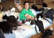 """고양이 1100마리 키우는 할머니 """"요녀석들 키우려고 반지, 차 다 팔아도 좋아"""""""