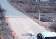 [사건파일] 남의 집 개 차에 매달고 질주한 남자…제2의 '악마 에쿠스' 사건