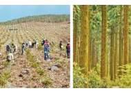 [커버스토리] 맑은 공기부터 홍수 방지까지…숲에서 126조원 혜택 얻죠