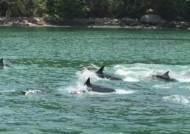 남해안 해안에 돌고래떼…해경 외해로 이동 유도 성공