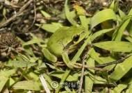[서소문 사진관] 수원에는 수원청개구리가 산다