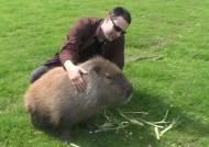 [영상] 전인지 기겁한 골프장 1m 거대 쥐, 알고 보니