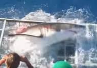 [영상] 다이빙 철창 뚫고 들어간 대형 백상아리, 아찔한 장면 공개