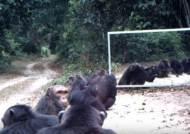 [영상] 정글에 거울 설치 실험…깜짝 놀란 동물들