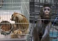 국제적 멸종위기동물 밀수입…아동에 노출돼 전염병 위험