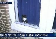 정유라 덴마크 집에서 포착된 고양이 어떻게 됐을까