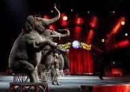 [인사이트] 의자에 앉은 코끼리…이 불훅에 얼마나 찔렸을까