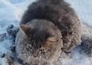 자고 일어나니 영하 35도 … 네 발이 얼음에 갇혀버린 고양이
