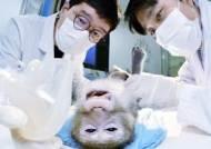 [J가 가봤습니다] 원숭이 400마리, 사람 위해 불치병과 싸우는 이곳