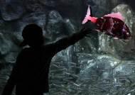 4대강 로봇물고기, 아쿠아리움에 나타났다