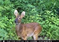 국립공원 생태통로, 제일 단골인 동물은?