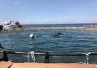 과천 서울대공원 마지막 남방큰돌고래 2마리 제주 바다로 간다