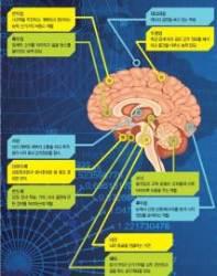 [소년중앙]천억 개 뇌세포에 기억 저장, 뇌 속 해마가 담당합니다