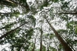 [굿모닝 내셔널]'장성 축령산 편백 치유의 숲'에서 주말 힐링 어때요?