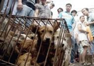 중국서 '개고기 시장' 급속히 커진 것은 조폭 탓?