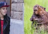 네티즌들 놀래킨 '저스틴 비버'의 동물농장 출연
