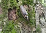 [굿모닝 내셔널]천연기념물 '장수하늘소' 사는 산림 생물의 보고 '광릉숲'의 여름
