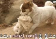 버려진 새끼 강아지들을 입양해 친자식처럼 키우는 강아지