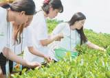 [라이프 트렌드] 농작물 수확, 6차산업 견학 농촌 체험 덕에 행복한 하루