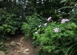 [서소문사진관]여름에서 가을로 가는 천상의 꽃길, 계방산