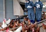 """""""내일부터 계란 유통 재개...문제 농가 3월 검사 때는 농약 안 나왔다"""""""