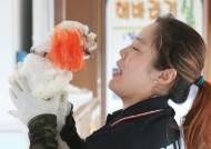 반려동물 '바캉스철 비극' … 월 9000마리 버려진다