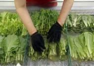 상추값 257% 상승…생산자물가 5개월만에 오름세
