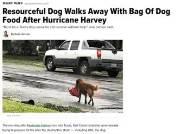 美 허리케인 속에서 '사료 가방'챙겨 집으로 돌아온 개