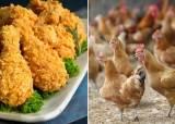 드디어 공개된 치킨용 닭고기 실제 가격