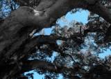 [더,오래] 조민호의 이렇게 살면 어때(17) 상처뿐인 영광 남긴 말벌과의 사투