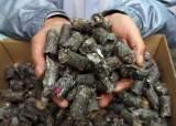 폐기물로 만든 연료 수도권·대도시에서 못 태운다