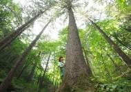 나무의사, 나무치료기술자까지...산림분야 일자리 6만개 만든다