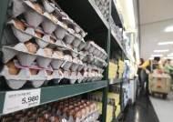 """""""살충제 계란 10개 중 8개는 이미 식탁에…회수율 19.2%"""""""