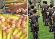 살충제 달걀 2만5000개 유통···군인이 다 먹었다