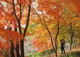 가을 색 즐기려면 여기로…절정 앞둔 만추 여행지 6곳