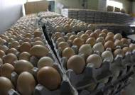 세척한 계란 냉장유통 의무화…계란 보관·유통 안전기준 강화