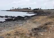 온통 회색빛으로 변한 제주 바닷가 주민들 말 들어보니