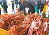 [뉴스 속으로] 대게·왕전복·홍해삼·찰가자미 … 독도 바다의 보물이죠