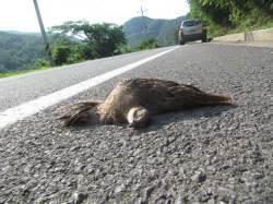 도로 위 무덤 '로드킬'…동물도, 사람도 아찔