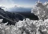 [굿모닝 내셔널]초겨울 한라산, 성탄트리 구상나무 눈꽃 절정